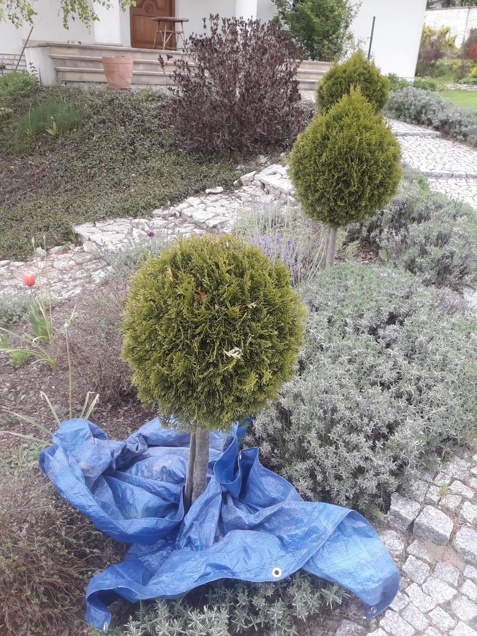 Przycinanie i formowanie drzew