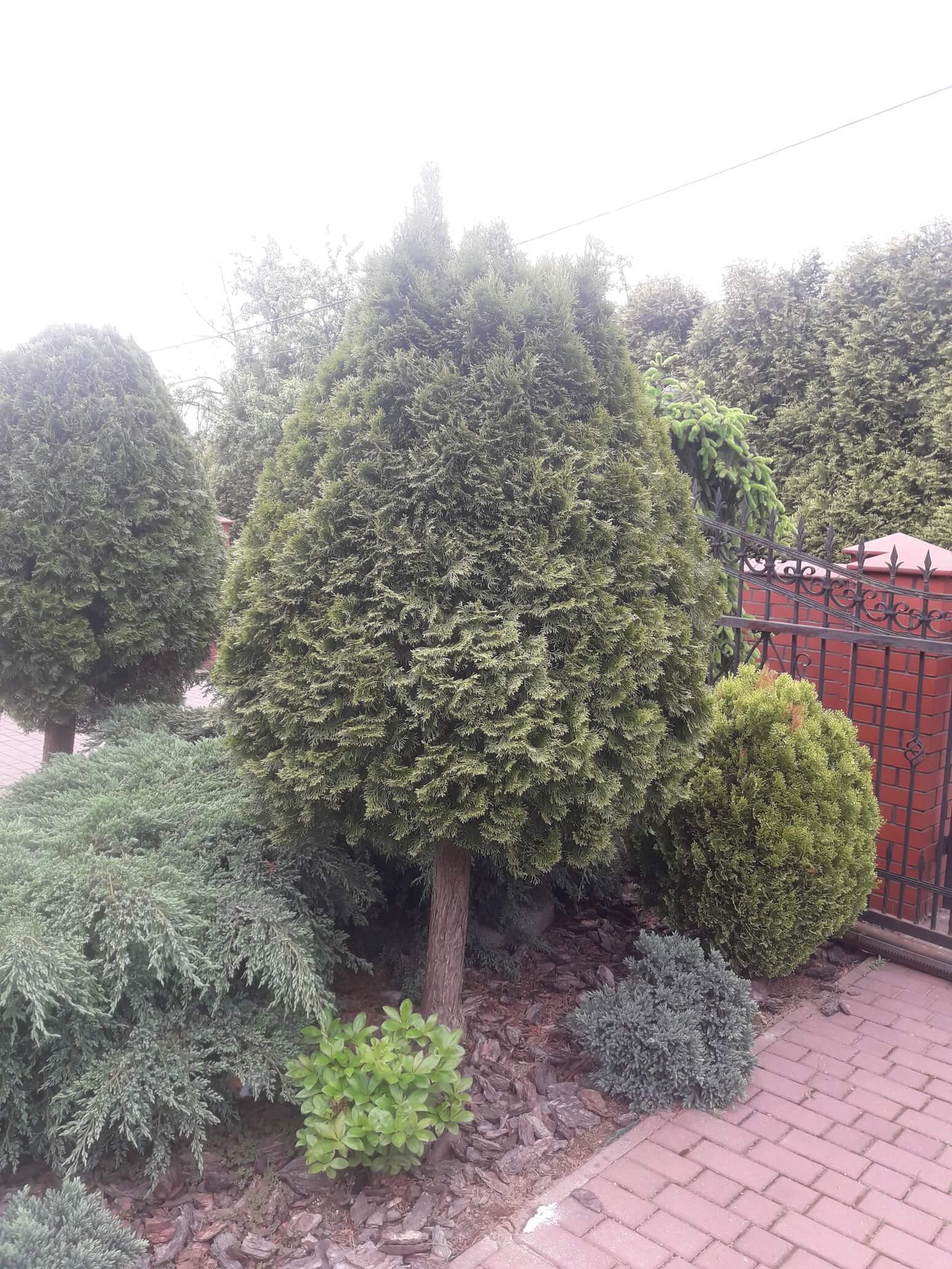 Pielęgnacja krzewów i drzew Kraków