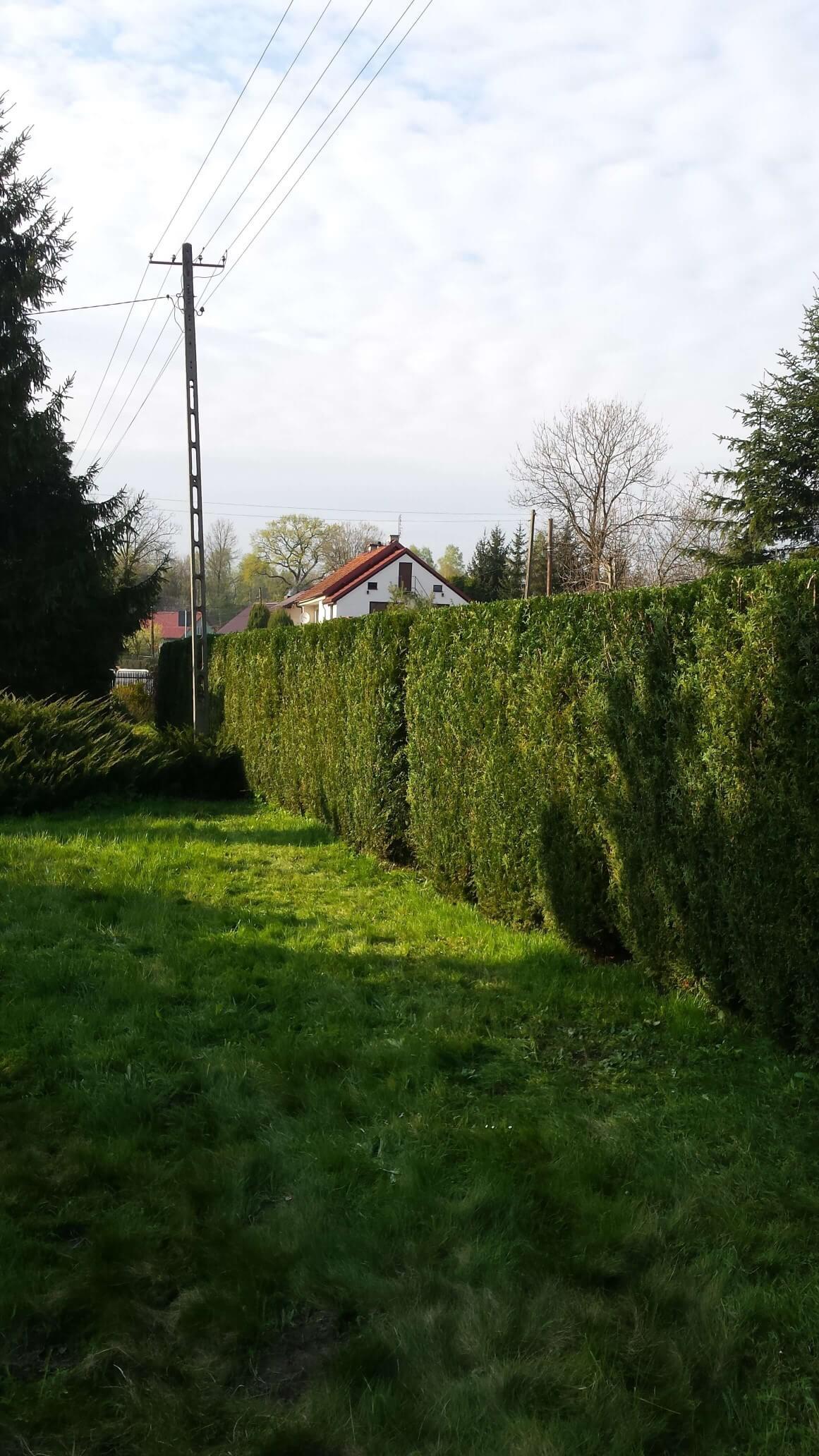 Utrzymania terenów zielonych i ogrodów Kraków