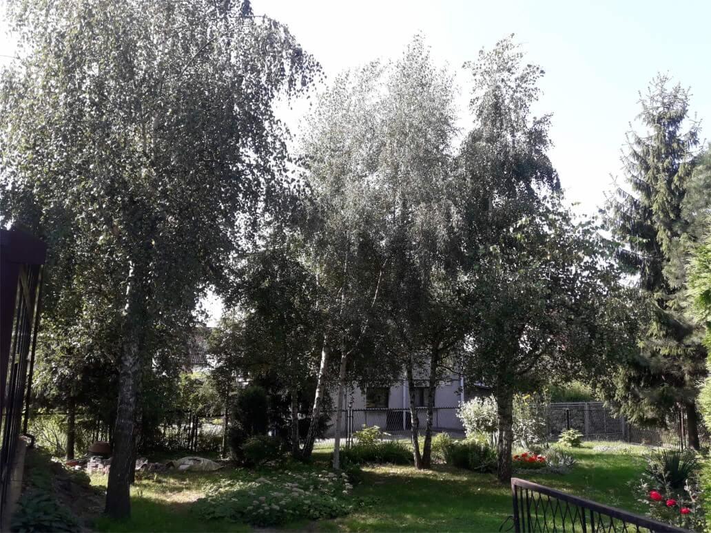 Prace z zakresu utrzymania terenów zielonych i ogrodów
