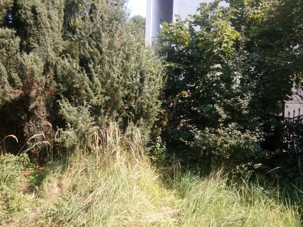 Wykaszanie wysokich traw przed