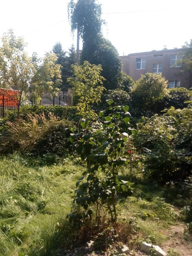 Karczowanie ogrodu przed